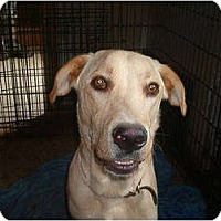 Adopt A Pet :: Rochester - North Jackson, OH