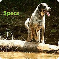 Adopt A Pet :: Mr. Specs - Danbury, CT