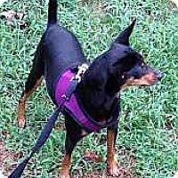 Adopt A Pet :: Willow - McDonough, GA