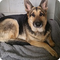 Adopt A Pet :: Raven - Franklin, NH
