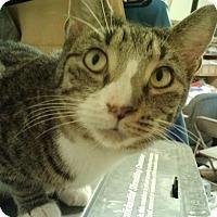 Adopt A Pet :: Scarlett - Delmont, PA
