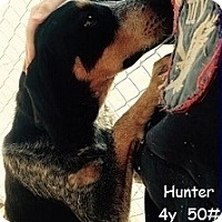 Adopt A Pet :: HUNTER - Birmingham, MI