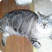 Adopt A Pet :: Buffie - Alamo, CA