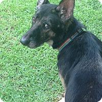 Adopt A Pet :: Zoey - Daleville, AL