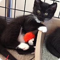 Adopt A Pet :: Hazel - Horsham, PA
