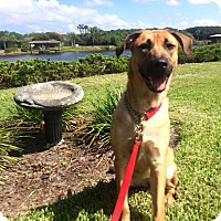 Adopt A Pet :: Zara - Ormond Beach, FL