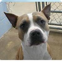 Adopt A Pet :: O'neal - Springdale, AR