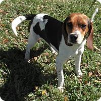 Adopt A Pet :: Alex - Tampa, FL