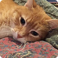 Adopt A Pet :: zz 'Ginger' courtesy listing - Cincinnati, OH