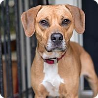 Adopt A Pet :: Miracle - Baton Rouge, LA