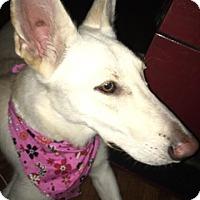 Adopt A Pet :: Summer - Bellbrook, OH