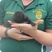 Adopt A Pet :: 9 - Waycross, GA