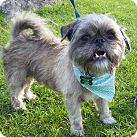 Adopt A Pet :: Chewy - Plant City, FL