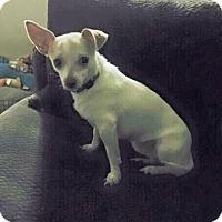 Adopt A Pet :: Ivy - Fort Lauderdale, FL