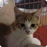 Adopt A Pet :: DAISY - Pittsburgh, PA