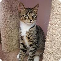 Adopt A Pet :: City - Waxhaw, NC