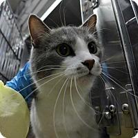 Adopt A Pet :: Nona - Chicago, IL
