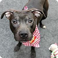 Adopt A Pet :: GEORGE - Kimberton, PA