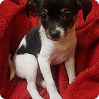 Adopt A Pet :: Hollis - Accident, MD