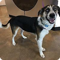 Adopt A Pet :: Ricky - Redmond, WA