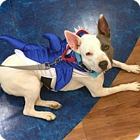 Adopt A Pet :: D.B - Charlotte, NC