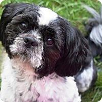 Adopt A Pet :: Snoopy - Springfield, VA
