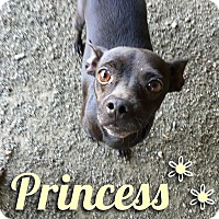 Adopt A Pet :: Princess - Waxhaw, NC
