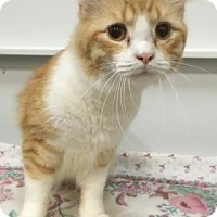 Adopt A Pet :: Henry - Elyria, OH