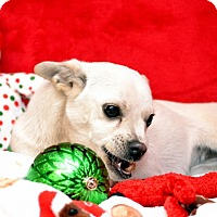 Adopt A Pet :: Chloe - Okeechobee, FL