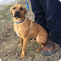 Adopt A Pet :: Romeo - Washington, DC