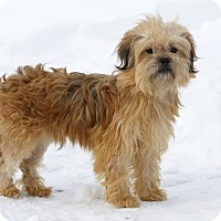 Adopt A Pet :: Gindle - Ile-Perrot, QC