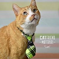 Adopt A Pet :: Sam - Wayne, PA
