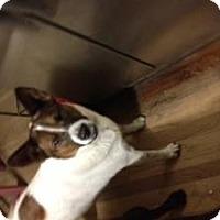 Adopt A Pet :: Coco - Rocky Mount, NC