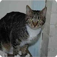 Adopt A Pet :: Angel - Oyster Bay, NY