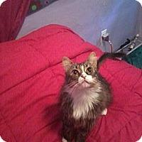 Adopt A Pet :: Baby - Modesto, CA
