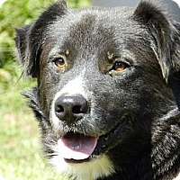 Adopt A Pet :: TEDDY - Pawling, NY