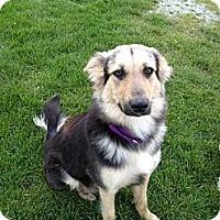 Adopt A Pet :: Emma - Palmyra, WI