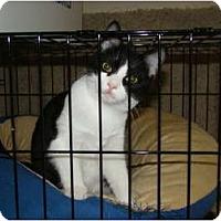 Adopt A Pet :: Hugger - McDonough, GA