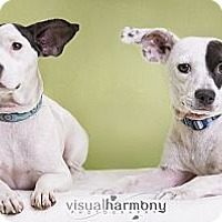 Adopt A Pet :: Penny and Charlie - Phoenix, AZ