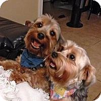 Adopt A Pet :: Mimi - Seminole, FL