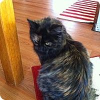Adopt A Pet :: Furby - Piscataway, NJ
