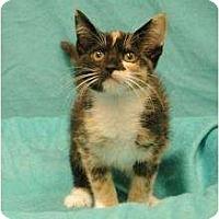 Adopt A Pet :: Pricilla - Sacramento, CA