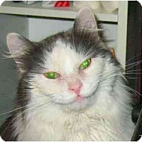 Adopt A Pet :: Abe - Plainville, MA