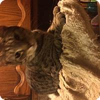 Adopt A Pet :: Oakley - Clay, NY