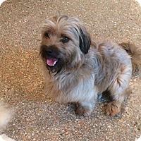 Adopt A Pet :: ARTHUR - Boca Raton, FL