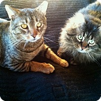 Adopt A Pet :: Ricky & Toby - New Kensington, PA