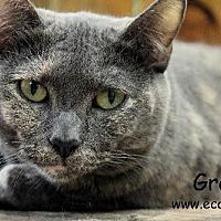 Adopt A Pet :: Grace - Pensacola, FL