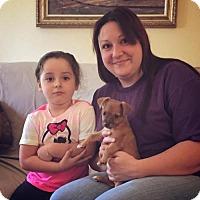 Adopt A Pet :: Bud - Sacramento, CA