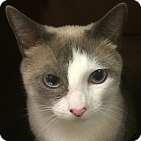 Adopt A Pet :: Valentine - Winchester, CA