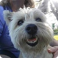 Adopt A Pet :: Tiki - ROME, NY